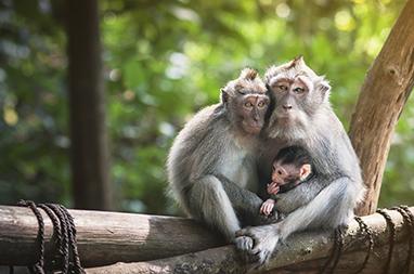 Indonesia-Bali-Monkey Forest