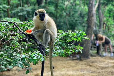Bridgetown-Barbados-Καταφύγιο άγριας ζωής