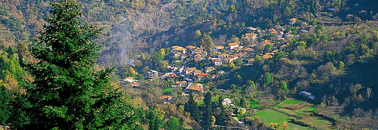 Ελάτη - Περτούλι