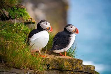 Denmark - Faroe Islands - Επίσκεψη στο νησί Μίκινες