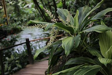 Suva-Fiji-Garden of the Sleeping Giant και Hot Springs Sabeto, Viti Levu