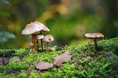 Grevena-Mushrooms of Grevena