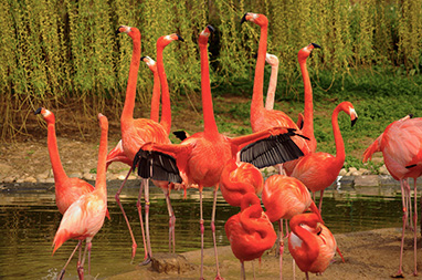 Germany- Heidelberg - Ζωολογικός κήπος