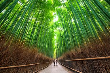 Japan-Kyoto-Arashiyama