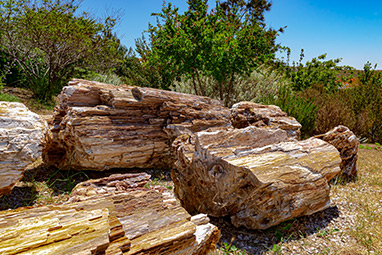 North Aegean Islands - Lesvos - Petrified Forest