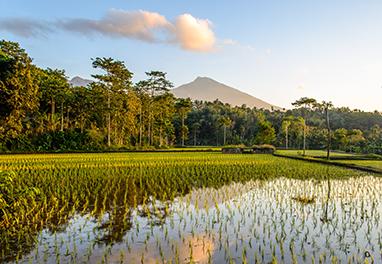 Indonesia-Lombok-Tetebatu Village