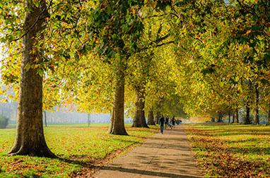 England - London - Hyde Park