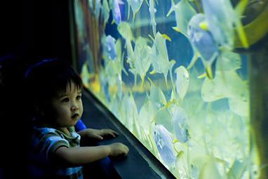 Philippines - Manila - Manila Ocean Park