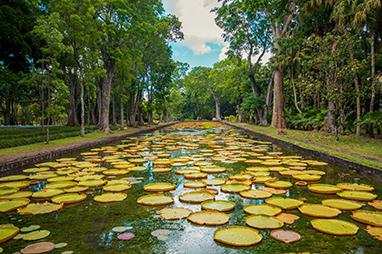 Indian Ocean-Mauritius-Οι Βοτανικοί Κήποι Sir Seewoosagur Ramgoolam