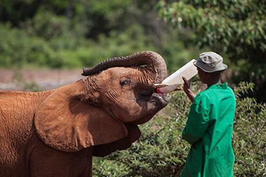 Kenya-Nairobi-David Sheldrick Wildlife Trust