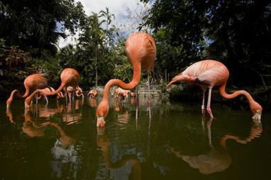 Bahamas-Nassau-Ardastra Gardens & Wildlife Conservation Center
