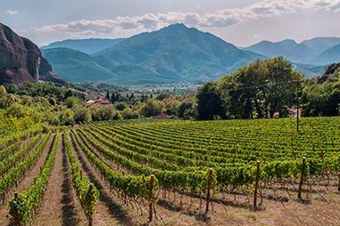Peloponnese-Nemea-Wine Tours