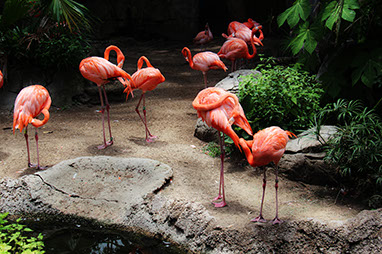 United States-New Orleans-New Orleans -Audubon Zoo