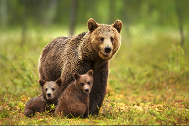 Nymfaio-Shelter of the Brown Bear - Arcturos