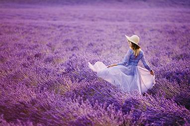 France-Provence-Πεδιάδες λεβάντας