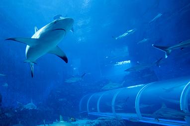 Singapore-Sentosa Island-S.E.A Aquarium