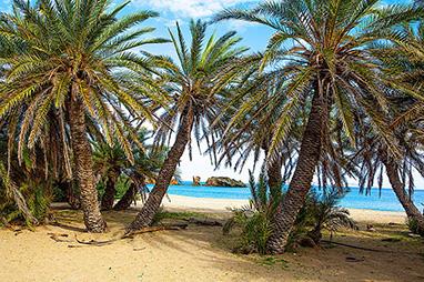 Crete - Sitia - Palm forest Vai