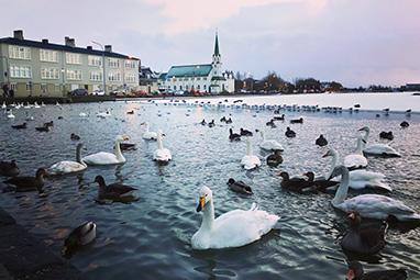 Iceland-Reykjavik-Λίμνη Tjornin